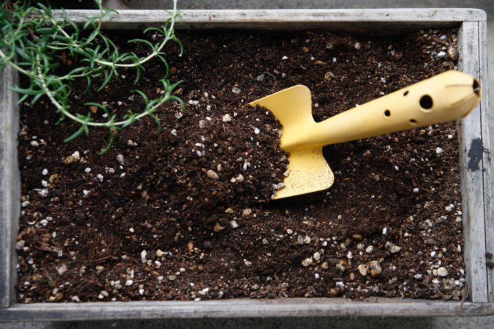 ピートモスとは?特徴や使い方を知り酸性の土をつくろう