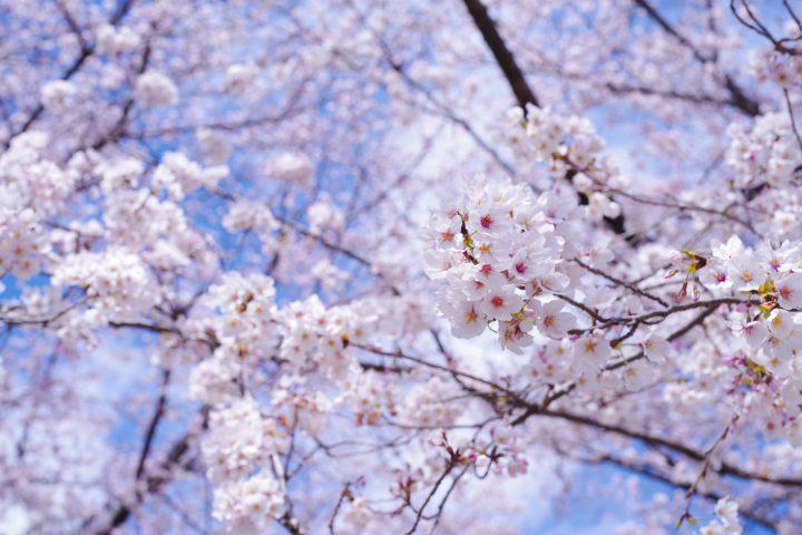 果樹や庭園の木を食い荒らす