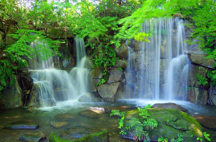 ヘビトンボと自然環境