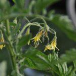連作障害とは?連作障害を防いで野菜を育てる方法や予防策を紹介
