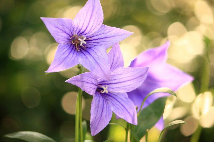 【8~9月に鑑賞する花の手入れ】初心者にもわかりやすく育て方や注意すべき害虫を紹介