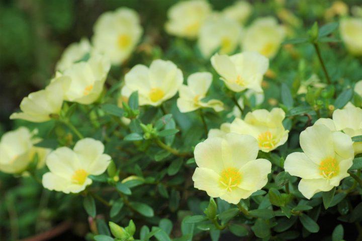 8~9月に観賞できる花を楽しもう