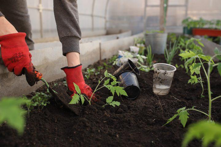 連作障害を防ぐ方法~家庭菜園におすすめ