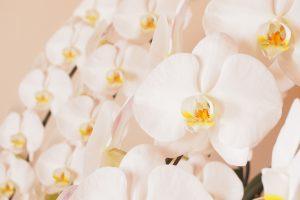 花を贈るときにはマナーが大切!開店祝いやお見舞いなどシーン別に紹介