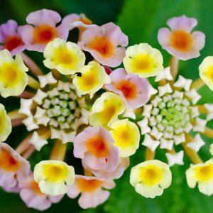 夏の花でガーデニング!暑さに強く育てやすい植物